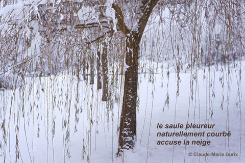 Haïga Copyright Claude-Marie Durix. Utilisé avec son aimable autorisation.